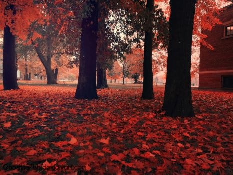Surrealistic Autumn by GhostingFish