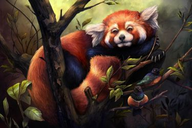 Red Panda digital art by charfade