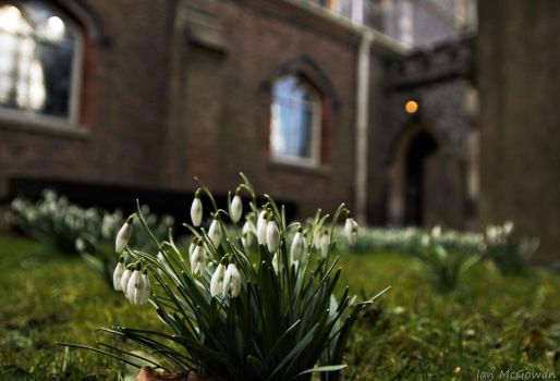 Spring in the churchyard . by 999999999a
