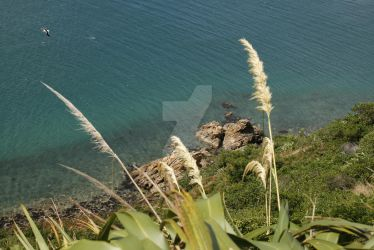 Somes Island Wellington - Ocean view by VenusFlowerDesignNZ