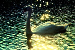 Swan Song by incolor16