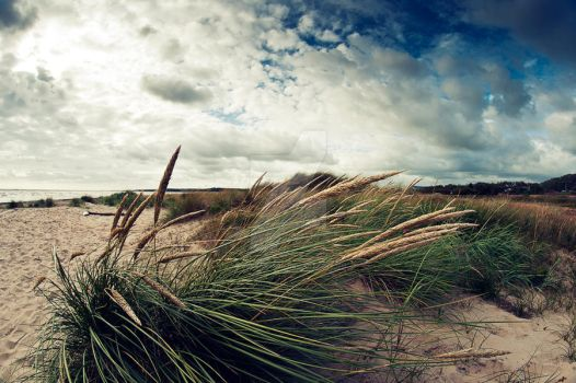 Beach grass by MbOscarsson