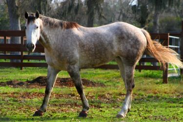 appaloosa by TlCphotography730