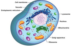 Cell Structure by rizzope