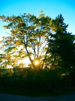 Tree on Fire by Feuerfeder