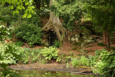 Enchanted Woods by NickiStock