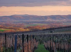 Vineyards by photonFUEL
