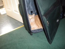Suitcase cat by StephScribbles