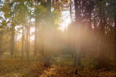 Autumn forest stock 02 by CindysArt-Stock