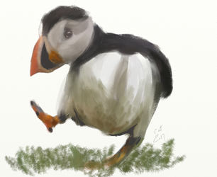 Puffin by Catmandolin