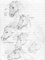 horse expressions by DoodlesandDaydreams