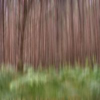 Impenetrable Forest by houselightgallery