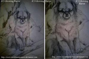 Snowy spaniel -UNFINISHED- by casualGEE