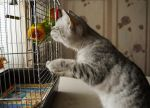 Cat with parrots by Lubov2001