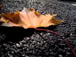 leaf by SProxo