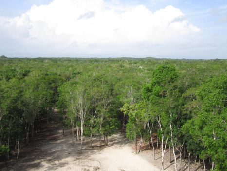 The jungles of Mexico by AudeS