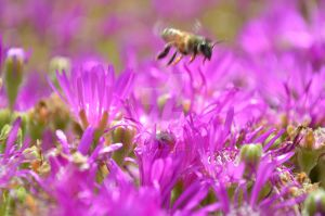 Flowers and Bee by MatthewLemon590