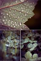 Morning Dew by NoctemPhotography