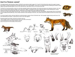 Red Fox tutorial by Mikan-no-Tora