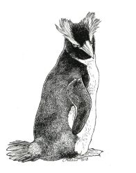 Inktober 2018 - Erect-crested Penguin by Ciameth