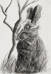 The Black Rabbit of Inle by SulaimanDoodle