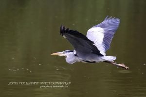 The Great Heron by guitarjohnny