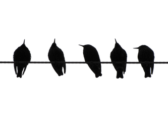 Bird on a Wire 2 PNG by chaseandlinda