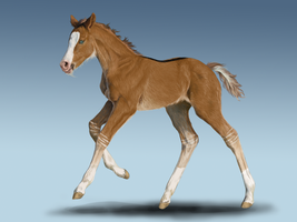 SSS Ashka - For Sale by DalRiataStables