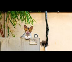 Urban Cats - 13 by MARX77