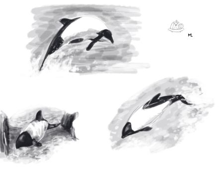 Commerson's dolphin by blueiguan