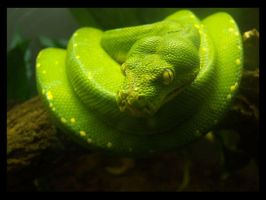 Green Python by IvoryPetals