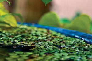 little lilly pond by lorelai-87