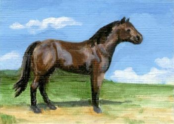 Bay QH ACEO by calzephyr