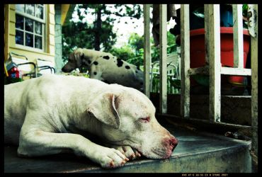 Perros by stonemx
