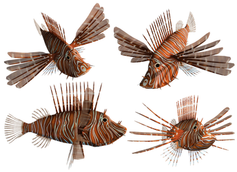 Lion Fish PNG Stock by Roy3D