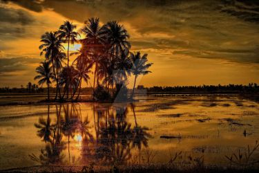 Golden Sunset by pangwei