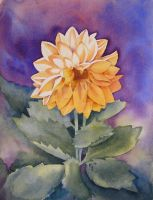Yellow Dahlia by IvieMoon