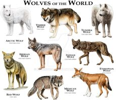 Wolves of the World by rogerdhall