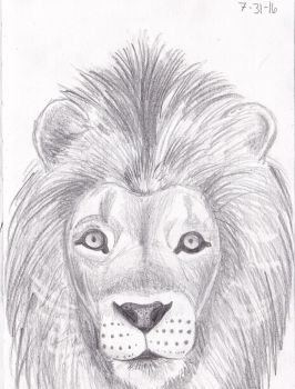 Lion Sketch by NC-Torpedo