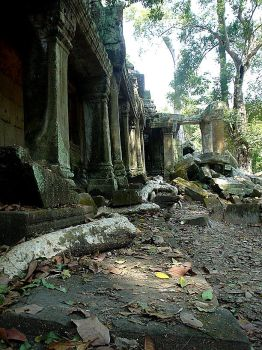 Ta Prohm - Roots by Fraulein-Dangersmith