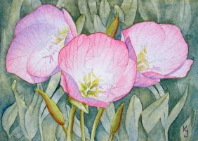 Mexican Evening Primrose by IvieMoon