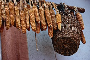 Corn for drying by Gerfer