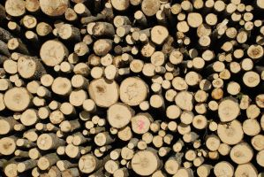 Wood Pile 5094690 by StockProject1