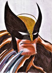 Wolverine by nic011