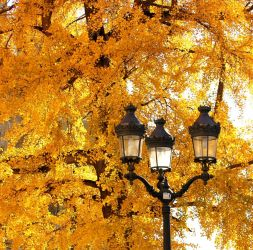 Golden leaves by Ornicar-photographie