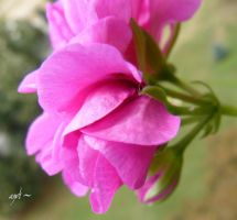 flower by andi40