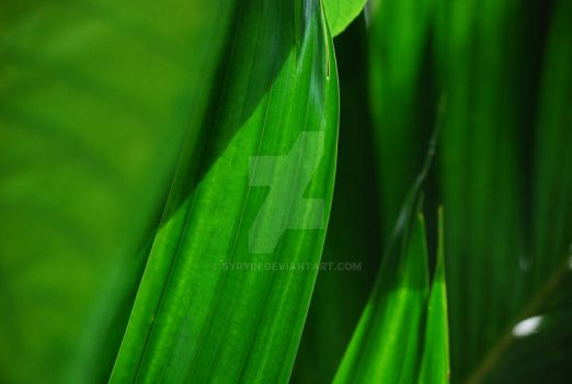 Leaves by Syryin