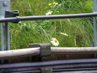 Flower and Rail by anakinluvr