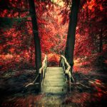 Autumn Fever by Oer-Wout