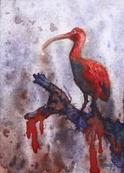 aceo (WC) scarlet ibis by kailavmp